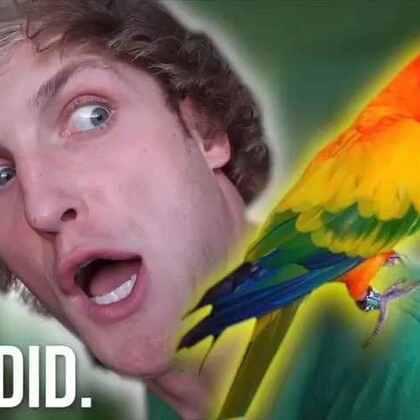我给我的鹦鹉买了一枚30000元的大钻戒💍#热门##搞笑#