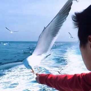 一个海鸟的故事😉#随手美拍#