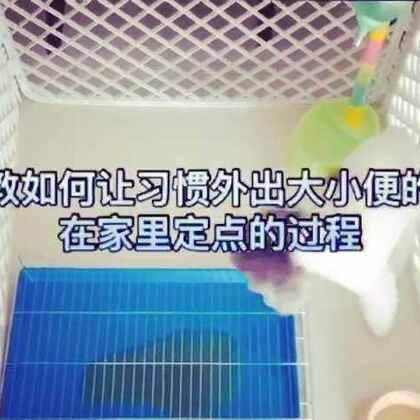 教狗狗在家定点大小便#教狗狗上厕所#