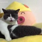 #给宠物配音#方家那只猫🐱又花痴了😍全程笑的肝疼😂#宠物内心小剧场##喵妹嘻哈剧#
