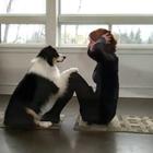 别人家的狗!#宠物#