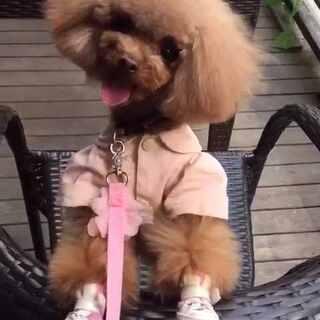 #宠物#不安分的小家伙😅😅#我的宠物萌萌哒#