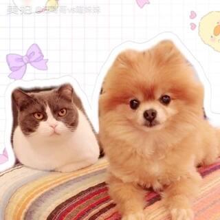 #宠物#试试美拍新功能😍妹子仔仔合伙撒狗粮😏表情神同步😎#百变背景#