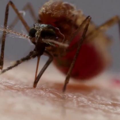 """蚊子是如何用6根""""针""""吸血的?每天涨点知识.😃😃😃"""