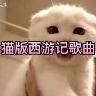 #喵星人##西游记#每日一喵,做猫我是认真的!