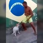 厉害了我的狗!😂
