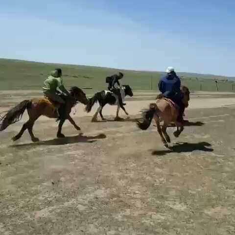 骑马 马术 草原野骑 兜 有糖 的美拍