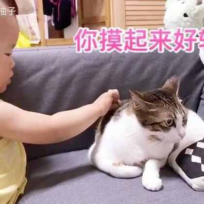 妹妹终于肯让柚子摸它了!要开始当好朋友了吗!😃😃😃#宝宝##萌宠##喵星人#