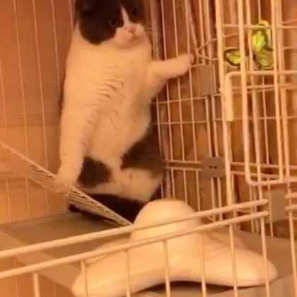 😨何方妖孽😖吓死本宫#宠物##逗比喵星人#