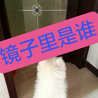 #宠物照镜子##逗比##随手美拍#路过的帅哥美女动动小手点下赞哦~