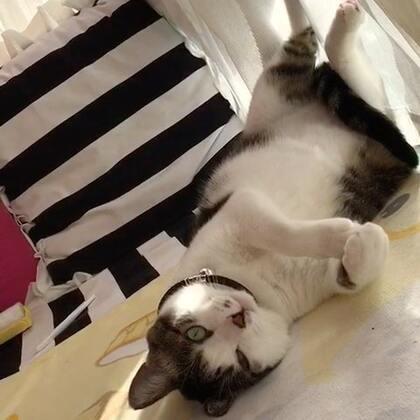 #宠物#喵爷很苏胡呀,还放了个⚡️……😁😁😁