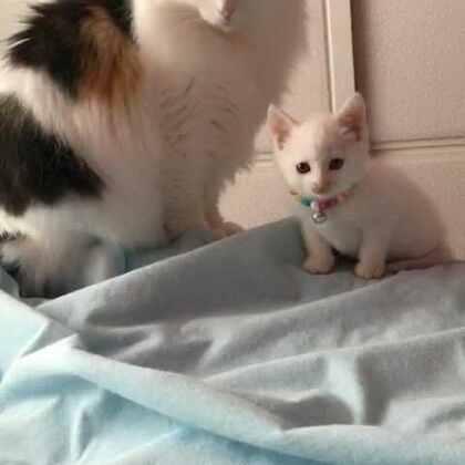 #宠物#画面美好温馨,莎姐带孩子……(小流浪猫限江苏盐城地区或附近城市可以接的领养,有意向加V信谈领养)