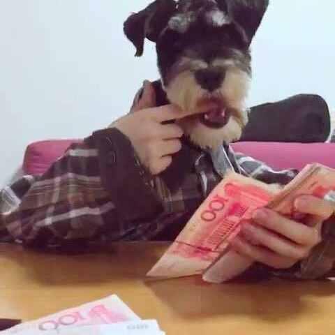 【媛月🐰美拍】赚钱啦~