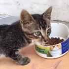 几日没来更新,主要是在楼下遇到了一只目测才两个多月的小狸猫,忙着照顾,喂养了5天取🉐️小猫信任成功带回家,现在已找到领养牠的新主人 从此过上幸福生活#宠物##关爱流浪动物##小阿狸🐱#