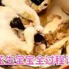 虽然我们才相识短短几天,但三花对我的信任让我好感动,炒鸡乖的让我见证了它生宝宝的全过程❤#十爷家的傻鹅子们##宠物#【我的新浪微博:https://weibo.com/u/2472976697】