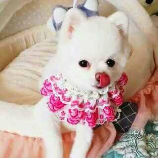 #宠物#每天最幸福的事就是麻咪喂窝吃东西🍖🍗🍤🍢🍡因为窝是小公举呀👼#穿秀##我的宠物萌萌哒#