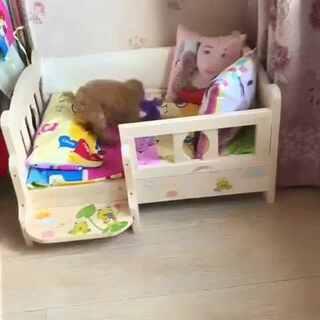 新床,貌似喜欢#宠物#