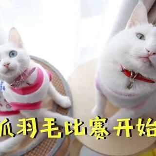 mimo: 麻麻,为什么受伤的总是我?(̨̡ ‾᷄⌂‾᷅)̧̢#mimo##宠物##搞笑#