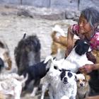 我随自愿者一同去探访照看300多只流浪狗的年迈奶奶,心灵震撼,泪奔#鼓手小陆##七旬老人#