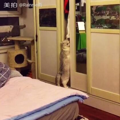#宠物##喵星人#想偷偷给自己选一件漂亮衣服的奥利,被我发现了🌚#高颜萌#