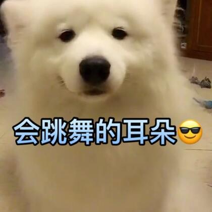 甩耳神舞!哈哈!#宠物##搞笑##热门#