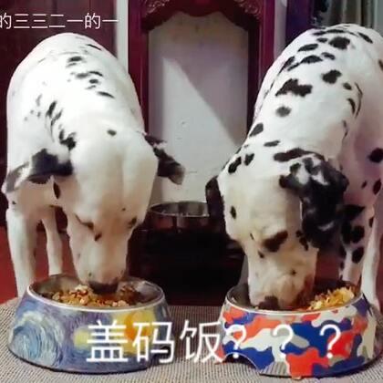 🥕胡萝卜鸡胸肉盖……盖码饭??🤔🤔😏#宠物#