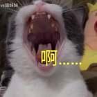跟着喵妹老师学声乐,吓跑一个算一个😂😂#宠物##宠物内心小剧场##喵妹嘻哈剧#