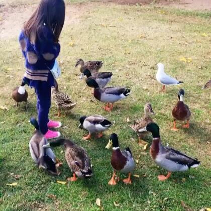 土澳生活。这些鸭啊鹈鹕啊,都是野生的,这边的小孩,感觉也是野生的😆#宝宝##糖小希#
