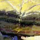 一波图片买家秀,不要再犹豫了。这么高颜值又好吃的蛋糕,你值得拥有。喜欢吃甜食的宝宝可以下单哦,这款蛋糕甜而不腻,颜值又高。微信号xyqq3344#美食##华宝巧师傅千层蛋糕##王俊凯#