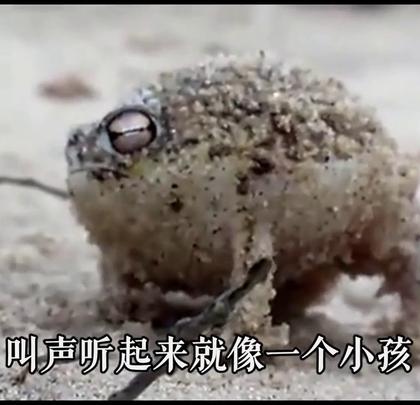这才是一只真正生气的雨蛙!😂😂😂#搞笑#