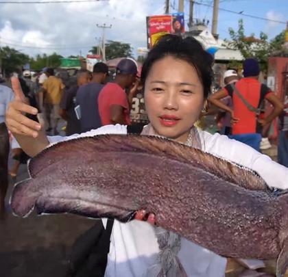 【斯里兰卡】的尼甘布鱼市看怪鱼!怕臭你就不要来😘!#旅行##斯里兰卡旅游##我要上热门#