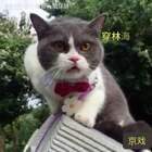 跟着喵妹唱京戏😂😂#宠物##宠物内心小剧场#