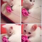 《流浪猫的霸气颜值》《领养代替购买选择买不到的爱》这些猫都是流浪猫,是我送出领养的一小部分,大家可以放弃品种歧视,它们一样漂亮可爱,也希望更多的人关注着关爱流浪动物,请善待🙏。微信:956326118(只限西安领养)#热门##萌宠##宠物救援##领养代替购买#