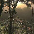 所罗门群岛:保护树木