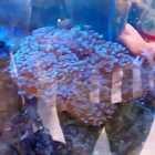 #自然博物馆#活珊瑚👣
