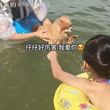 😍小迷妹给游泳中的仔仔加油助威😂😂#宠物##坚强的仔仔#