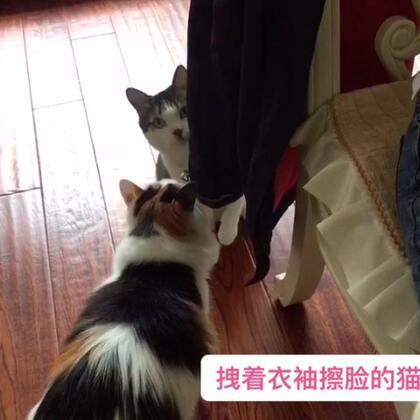 #宠物#蒙哥又逗比了😜,拽着衣袖擦脸呢……😆😆😆