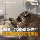 #宠物#干脆面洗手不会关水龙头,以为水龙头坏了,完了完了闯大祸了,最后还肇事逃逸啦......