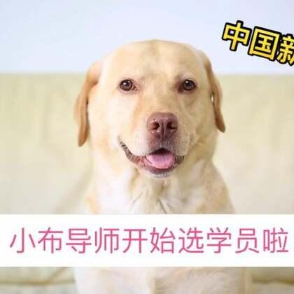 """#小布的日常生活# """"我叫韩小布 自从看了中国新歌声 就励志成为一名坐着战车冲向学员的导师 诶哟 这位学员 你很棒棒哦 """" #有歌冲我来#"""