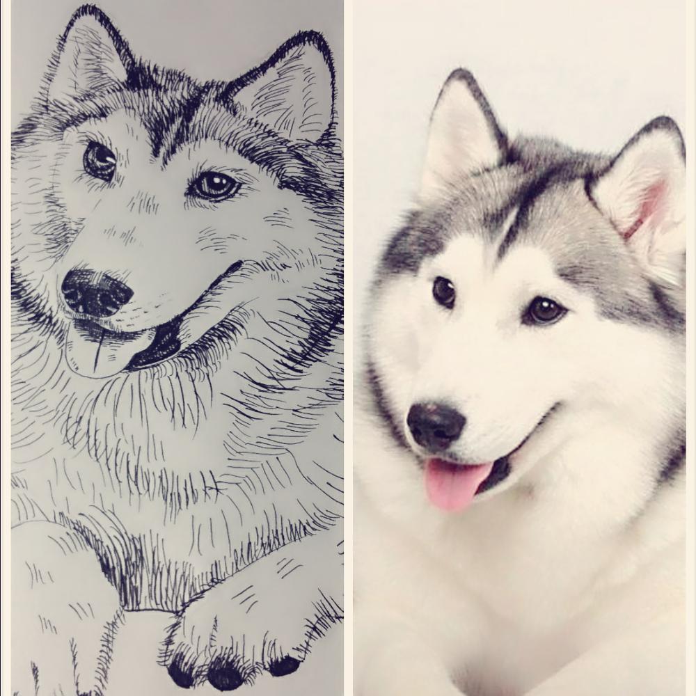 第一次用签字笔画动物,不是很像