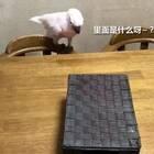 鹦鹉:请摆正你的位置!👿😂