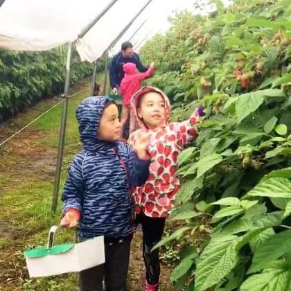 爱丁堡暴雨一天, 忽发奇想,带孩子们去农场摘水果🤦🏻♀️🤣😅 又冷又湿,可最后的结果完美❤️一家子都度过了一个愉快的周六。