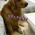 #宠物##搞笑##萌宠#当主人不在家时