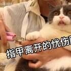 喵妹:指甲啊,你的离去,不是我的不挽留😂#宠物##给宠物剪指甲#
