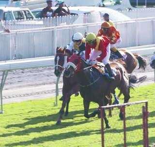 这匹马为中国人争气了 !在非洲赌马场夺得冠军,瞬间全场沸腾#hi走啦##带着美拍去旅行##我要上热门#