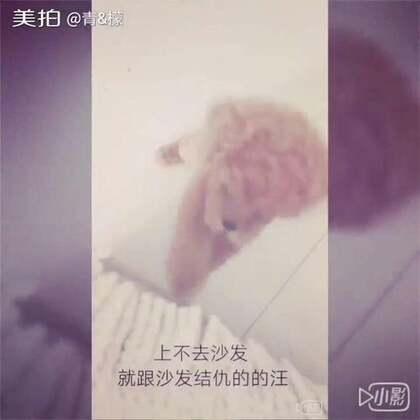 #cooky成长日记##宠物#之前的视频,由于U乐国际娱乐太小就被我删了重新编辑☺