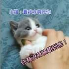#小猫咪##宠物##我要上热门#@美拍小助手 小猫好可爱!