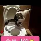 这只🐱特别聪明乖巧,教什么很快就学会了,还会用马桶🚽上厕所,本来是女主捡的小流浪猫养大,因孩子小升初,爸爸死活不让养,无奈重新找了领养人,还是我们美拍里的女生,现在照顾的很好,希望每一个宝贝都能被温柔以待🙏#领养代替购买##会上厕所的猫##热门##萌宠#