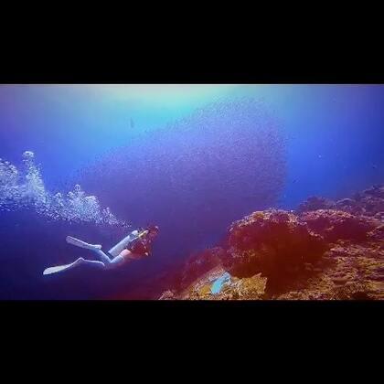 #潜水##旅行##科莫多潜水#被鱼球包围的感觉