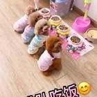 #宠物#四个小可爱好久没有排排队吃饭啦😁你们四个就负责一直卖萌下去吧😘